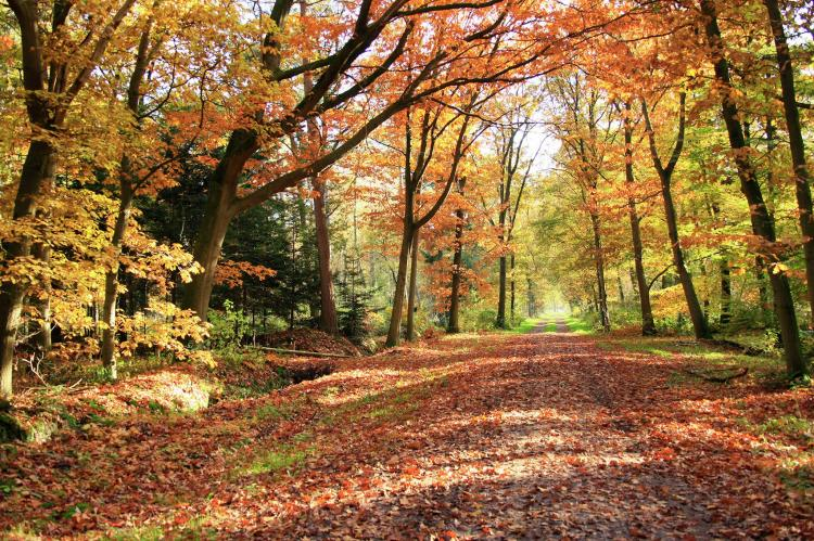 Holiday homeNetherlands - Overijssel: Vakantiepark de Lindenberg 4  [19]