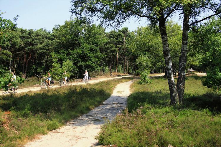 VakantiehuisNederland - Overijssel: Vakantiepark de Lindenberg 6  [21]