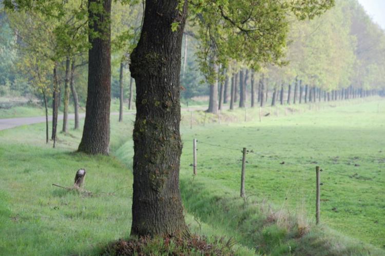 Holiday homeNetherlands - Noord-Brabant: De Pastorie  [35]