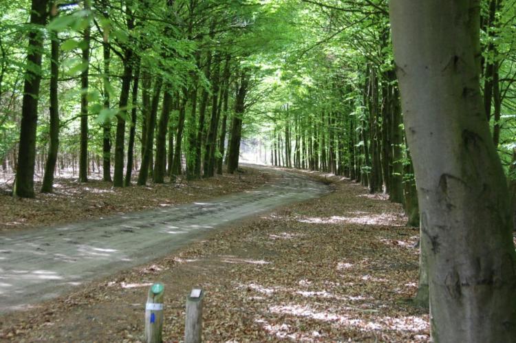 Holiday homeNetherlands - Noord-Brabant: De Pastorie  [27]