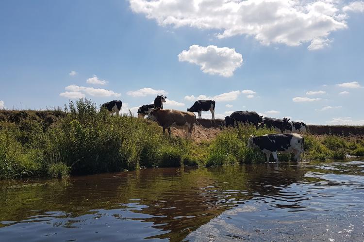 VakantiehuisNederland - Overijssel: Lodgepark 't Vechtdal  [23]