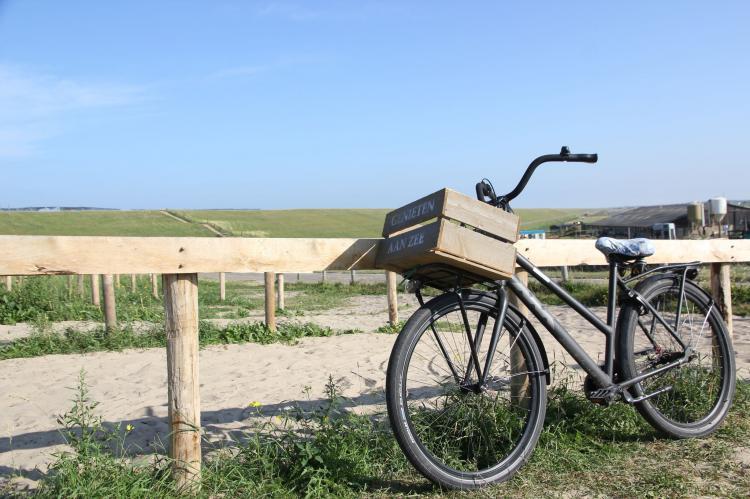 FerienhausNiederlande - Nord-Holland: Huize Glory Smaragd  [18]