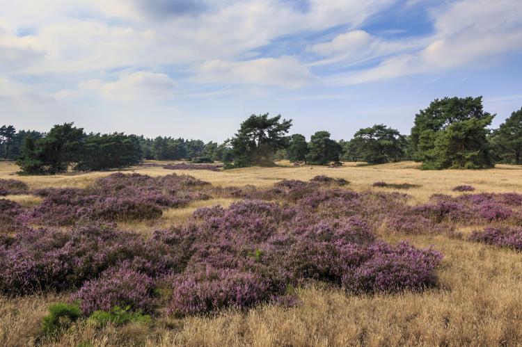 VakantiehuisNederland - Gelderland: Recreatiepark de Boshoek 12  [34]