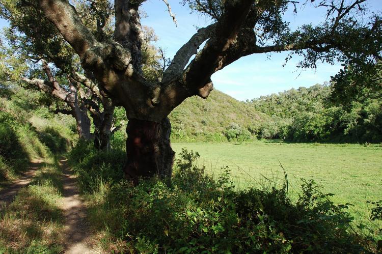 VakantiehuisPortugal - Alentejo: Casa da Adega  [37]